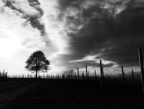 Ze Tri and ze sticks by Sheona Hamilton-Grant