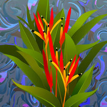 Heliconia by natogomes