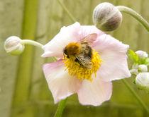 Collecting Nectar  by David Bishop