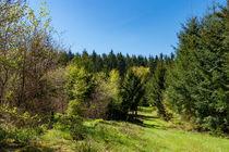 Der Weg als grünes Band im Wald by Ronald Nickel