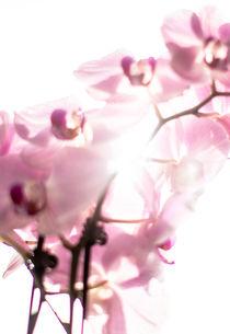 Orchidee von Fotostudio  S. Grey
