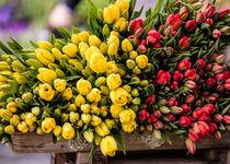 Tulpen gestapelt von Fotostudio  S. Grey