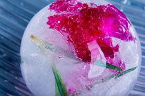 Nelke in kristallklarem Eis (new style) 1 von Marc Heiligenstein