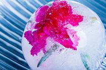 Nelke in kristallklarem Eis (new style) 4 von Marc Heiligenstein
