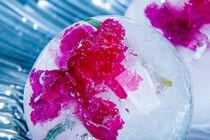 Nelke in kristallklarem Eis (new style) 3 von Marc Heiligenstein