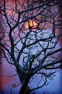 Suncatcher by Karen Black