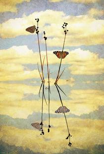 Butterfly Memories von Karen Black