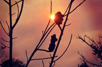 Bushfire Sunset von Karen Black