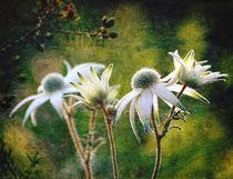 Vintage Flannel Flowers von Karen Black