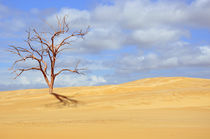 Desert Tree by Karen Black