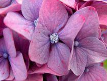 Hortensienblüte  von art-dellas
