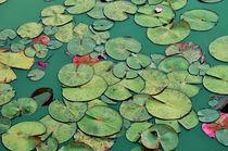 Waterlilies in Green by Karen Black