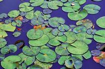 Waterlilies in Deep Blue von Karen Black