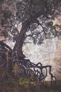 The Tangle Tree by Karen Black