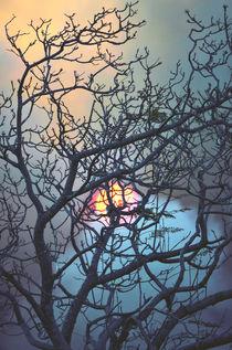 Aglow von Karen Black