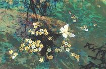 The Butterfly Pond von Karen Black