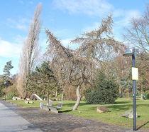Park von Edmond Marinkovic