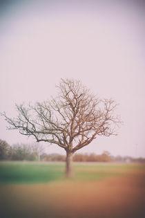 Frühlingsbaum von Bastian  Kienitz
