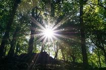 Die Sonne im Hochsommer im Wald by Ronald Nickel