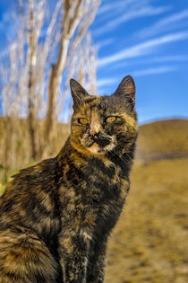 Adult Wild Cat Sitting and Watching by Daniel Ferreira Leites Ciccarino