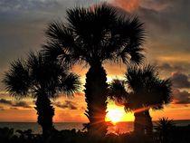Sonnenuntergang in Florida mit Fächerpalmen von assy