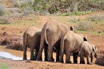 Elefanten am Wasserloch, Südafrika von assy