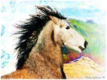 Young Spirited Andalusian von Sandra  Vollmann