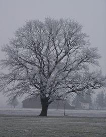 Lindenbaum im Winter von art-dellas