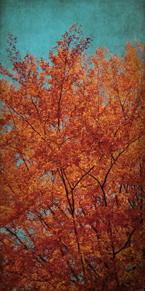 Indian Summer by AD DESIGN Photo + PhotoArt