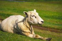 Glückliches Schaf von AD DESIGN Photo + PhotoArt