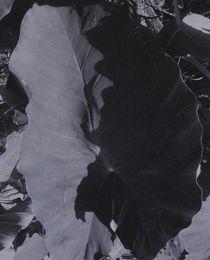 Taroblatt von art-dellas