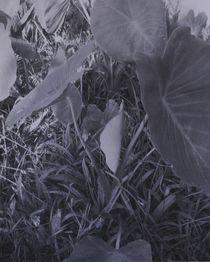 Taropflanze von art-dellas