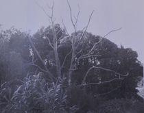 toter Baum von art-dellas