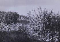 Schilf - Canna von art-dellas