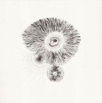 micrografías VI by aerostato