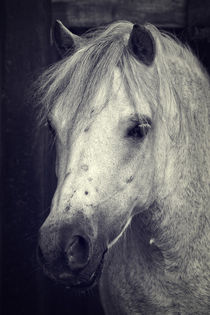 Welsh Cob by AD DESIGN Photo + PhotoArt