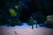 Garden Eels by war-bryde
