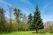 Landschaft mit Bäumen im Harz by Rico Ködder