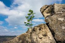 Felsen mit Baum im Harz by Rico Ködder