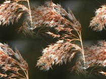 Gräser im Wind von Cornelia Greinke