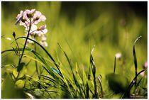 'Spring Magic' by Sandra  Vollmann