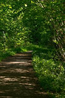 Waldweg von Stephan Gehrlein