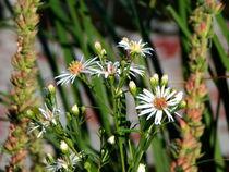 Blumen am Weg von Cornelia Greinke