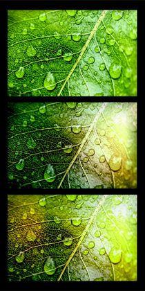 'Wet wet wet' by leddermann