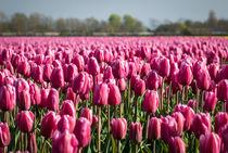 tulips 2 von Erik Mugira
