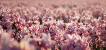 hyacinths 1 by Erik Mugira