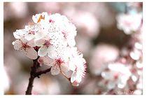 'Blütentraum' by Sandra  Vollmann