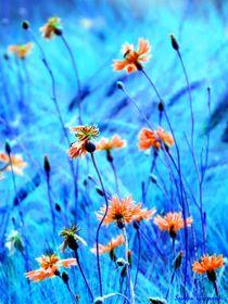 Kornblumen  von Sandra  Vollmann