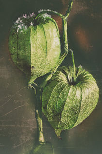 Green lighting - Lampion flower by Chris Berger