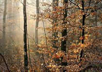 'Licht im Wald 5' by Bruno Schmidiger